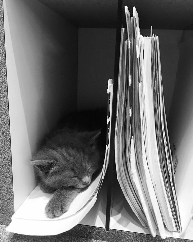 Cat in the Hôpital folders