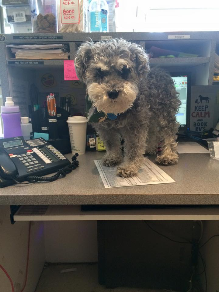 Dog on a desk