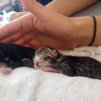 New born kitten